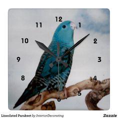 Lineolated Parakeet Square Wall Clock