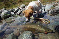 いいね!6,613件、コメント32件 ― Sageさん(@sageflyfish)のInstagramアカウント: 「Catch, admire, release. // #sageflyfish #perfectingperformance // Photo by Stu Tripney…」 #fishinglures