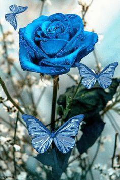 Blue rose and butterfly ~