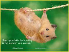 Een optimistische houding is het geheim van succes
