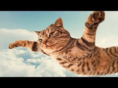 ► Funniest Cats Compilation!【HD】【Funniest Cat Videos EVER】Funny Cat Compilation 2016 - http://positivelifemagazine.com/%e2%96%ba-funniest-cats-compilation%e3%80%90hd%e3%80%91%e3%80%90funniest-cat-videos-ever%e3%80%91funny-cat-compilation-2016/ http://img.youtube.com/vi/_KCb7WsdUoE/0.jpg                                             The Funniest Cats In The World! Funny Cats Video, Guaranteed To Make You Laugh! The Most Hilarious Cat Video EVER! MUST WA