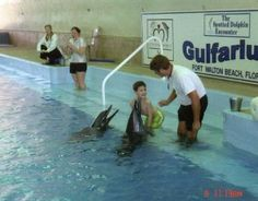 We found out today that my old friend Kiwi the dolphin died. I swam with Kiwi (and Daphne) at the Gulfarium in Florida a few years ago (about 5 years ago). I had the best time with them. When my Mo...
