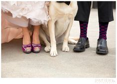 Dog in wedding photos! Colorado Wedding Photographer   ShutterChic Photography   www.shutterchicphoto.com