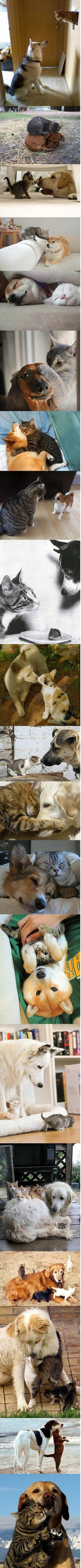 Cat and dog friendships!