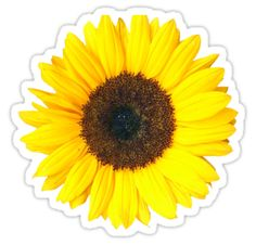 Novelty Sunflower 12 Stand Up Edible Image Cake Toppers Flower Birthday Fun & Garden Masha And The Bear, Birthday Fun, Flower Birthday, Transparent Stickers, Galaxy, Sticker Design, Glossier Stickers, Chakra, Artist