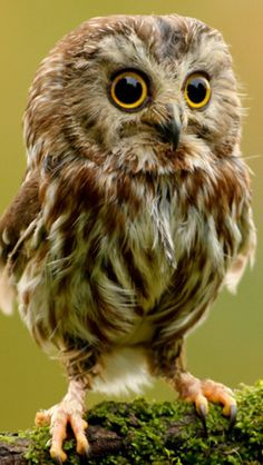 cute owl live wallpaper - Android Apps on Google Play