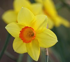 Beautiful Flowers & Inspirational Quotes | Nature - BabaMail