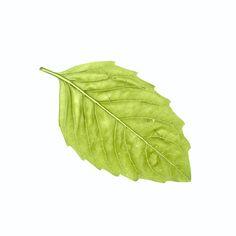 Leaf Print Craft