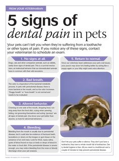 5 signs of dental pain in #pets - dvm 360 #petcare