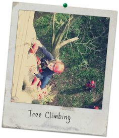 Tree Climbing, Carreg Adventure, Stouthall Country Mansion