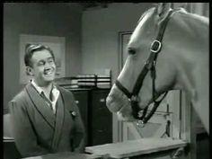 lol/Mr. Ed the talking horse