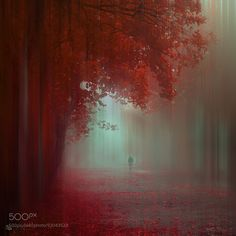 Fotos perfectas: autumn