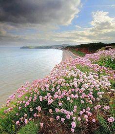 Dawlish, Devon, England.