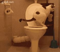 "bored-no-more: ""caught on tape! and that's how our toilet paper magically disappear ! more cats« """