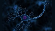 U.S. researchers have developed a nonsurgical technique to repair severed nerves in minute...