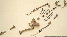 Ella es Lucy, el fósil que reescribió la evolución humana