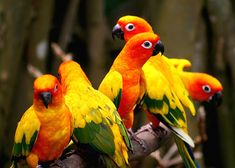 colorful birds - singapore by chillntravel, via Flickr