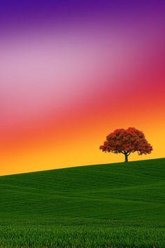 Beautiful World, Beautiful Places, Beautiful Sunset, Landscape Photography, Nature Photography, Sunset Landscape, Tree Forest, Dalai Lama, Ciel
