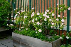 Vertical Rose Gardening Vertical gardens and green walls - the trend in urban landscapes