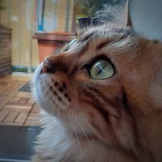 Elsa: There is so much world to explore out there. My eyes are telling stories . Don't miss a post from Tell The World, Telling Stories, Good Mood, Green Eyes, Photo S, My Eyes, Elsa, Explore, Cats