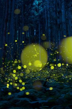 lifeisverybeautiful:  Firefly via 燈火 PHOTOHITO