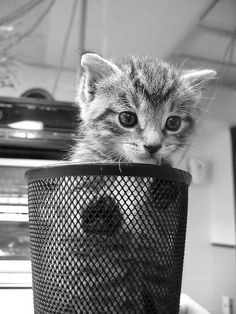 Your Daily Adorable: 10 Photos of Kittens in Cups