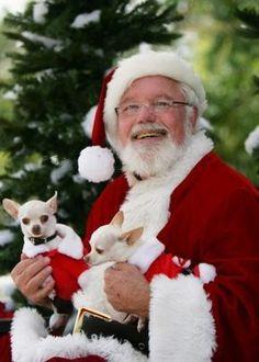 things that i love...christmas and chihuahuas Merry Christmas Card Puppy Holiday Dogs Santa Claus Dog Puppies Xmas Chihuahua