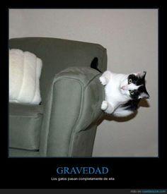 GRAVEDAD - Los gatos pasan completamente de ella