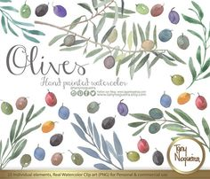https://www.etsy.com/mx/listing/249518459/olivo-hojas-y-ramas-de-olivo-aceitunas #olive #aceitunas #chef #watercolor #oliveoil #oliveleaves #italianlife #toscana #italy #art