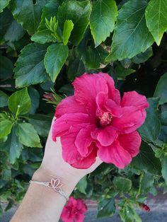 Hibiscus flowers x @lindsayylindss