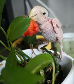 Cute Birds, Parrots, Keep Warm, Feathers, Cute Animals, Children, Baby, Birds, Pets