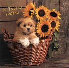 Preji Vse nejlepsi k Tvemu svatku! Hodne zdravicka,stesti a lasky! Runes, Cute Animals, Teddy Bear, Toys, Facebook, Garlic, Pretty Animals, Activity Toys, Cutest Animals