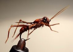 Grasshopper fly