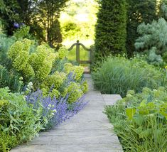 soft, billowing plants, backed by evergreen hedges with gateway