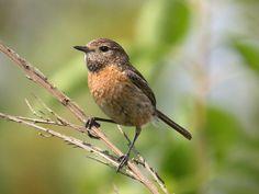 Belgium, Bird, Female, Animals, Animales, Animaux, Birds, Animal, Animais