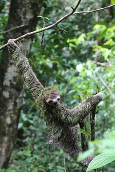 3 toed sloth Photo by Theresa Lord — National Geographic Your Shot