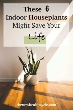 The best air purifying indoor houseplants and the facts about lung cancer. Adding these 6 indoor garden houseplants might decrease your risk of lung cancer by filtering and cleaning the cancer-causing Indoor Palm Trees, Indoor Palms, Best Indoor Plants, Cool Plants, Air Plants, Garden Plants, Planting For Kids, Lunge, Air Pollution