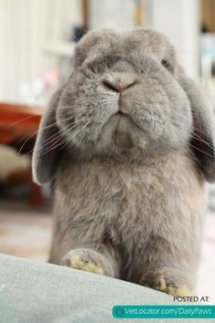 Daily Paws Picture of the Day: Adorable Bunny! - http://www.vetlocator.com/dailypaws/2013/10/daily-paws-picture-of-the-day-adorable-bunny/