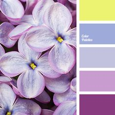 Soft combination of spectrally close lilac and gray-lavender hues is highlighted with rich violet and shaded yellow. This palette suits well winter or spri.