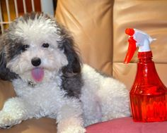 Natural Dog Shampoo - 1 cup Dawn liquid, 1 cup white vinegar and 1 quart warm water