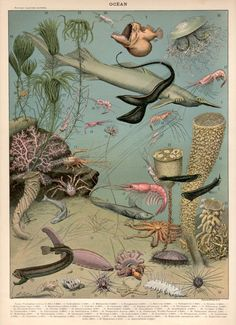 Vintage - Natural History - Botanical - Scientific - Print - Sea Life - Underwater World - Ocean Life - Fish -