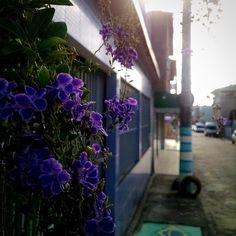 Rua florida  #floweroftheday #flowermagic #flowers #littleflowers #street #amazing #sun #shine #shining #beautiful #love #epic_capture #notfilter #TagsForLikes #pixrlexpress #pixrl #igersES #igers #ig_espiritosanto #igersBrasil #igs_photos #picoftheday #natureart #nature #macrolovers #macro