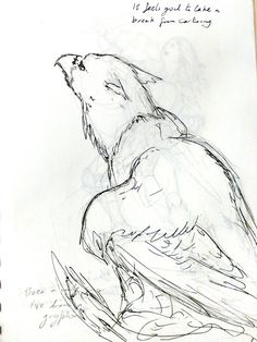 gryphon (feel free to repin!)