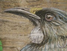 Rustic gicle print of a hand drawn tui on A3 paper.  Tui are unique (endemic) to…