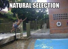 Natural selection... I think we should apply the same rule to pedestrians