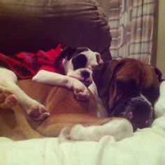 Boxer Lovers — Keeping Warm.