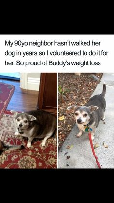 Bored Panda put together a list for all the dog lovers out there not of just dog photos but dog memes - to keep you grinning from ear to ear all day. Funny Animal Memes, Dog Memes, Funny Dogs, Funny Memes, Puppy Meme, Animal Humour, Funniest Memes, Funny Videos, Cute Little Animals