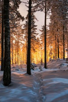41 Outdoor Photography Winter Forests – World Landscape Photography Tips, Winter Photography, Outdoor Photography, Nature Photography, Night Photography, Winter Szenen, Winter Magic, Winter Sunset, Winter Trees