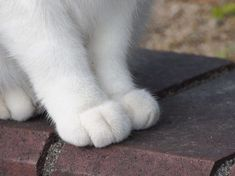 猫の足だけ撮ったのや寝転がってる猫とか貼っていく - ゴールデンタイムズ
