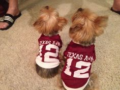 12th Man jersey for your furry friend!